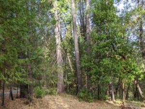 Unkept wilderness and forest floor.