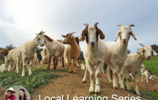 goats for land clearing nevada county california fire break