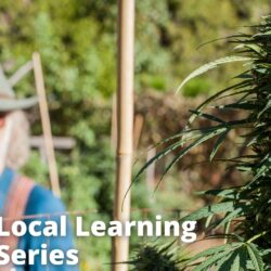 A Local History of Cannabis, Solar and Sustainable Cultivation in the Sierra Foothills of California
