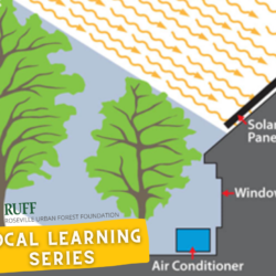 Using Trees to Shade Your House, Not Your Solar Panels
