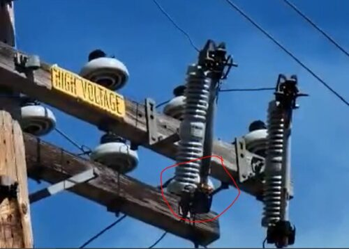 high voltage cutout power pole fire